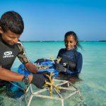 Aktivite, Kurumba Maldives
