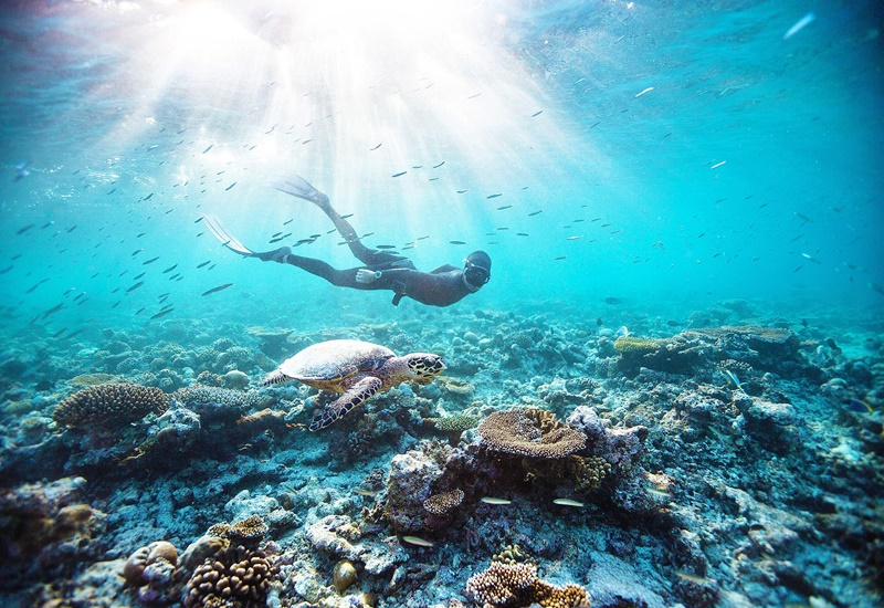 Dalış Kulübü, Lily Beach Maldivler