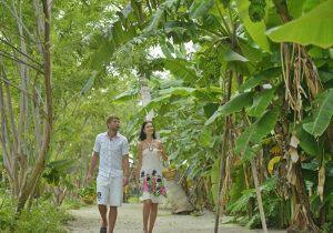 Meyve Toplama, Sun Island Resort Maldives